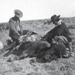K Skinning Buffalo